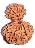 ganesh gauri Види Рудракші та їх значення. Частина 3: Рідкісні Рудракшини