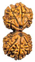 gauri shankar Види Рудракші та їх значення. Частина 3: Рідкісні Рудракшини