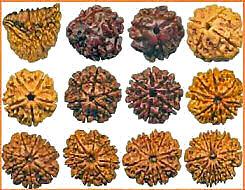Rudreksha Beads